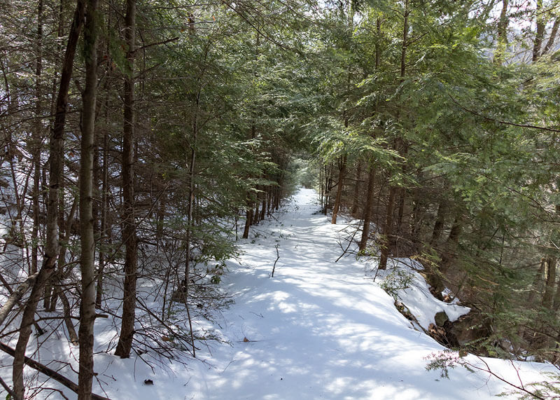 The old rail grade above Dutchmans Run in the McIntyre Wild Area.