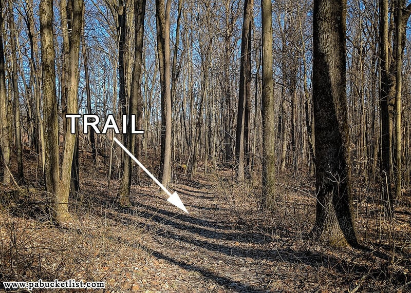 The unblazed but well-worn trail to use when visiting Grindstone Falls.