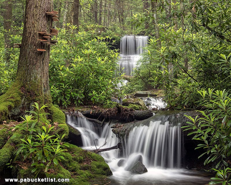 The greenery comes alive at Round Island Run Falls in the summer months.