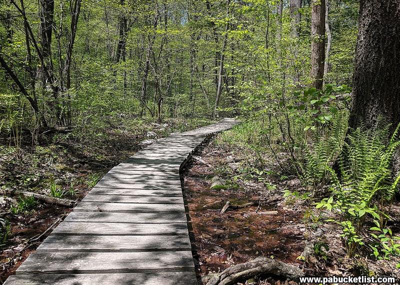 A boardwalk through a swampy area near the top of Blue Mountain.