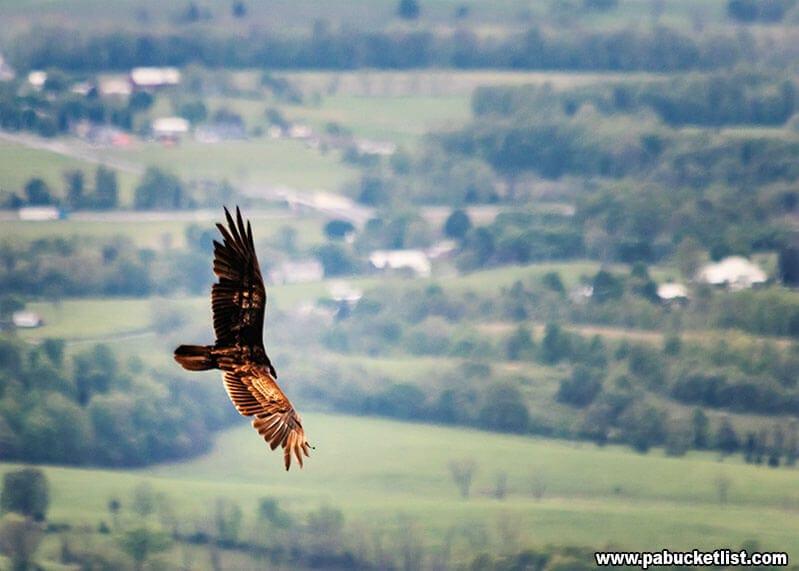 Watching buzzards from the Flat Rock Vista.