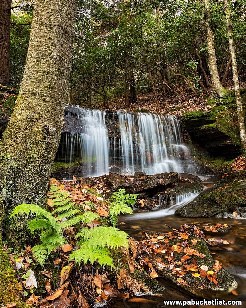 Ferns around Kyler Fork Falls.