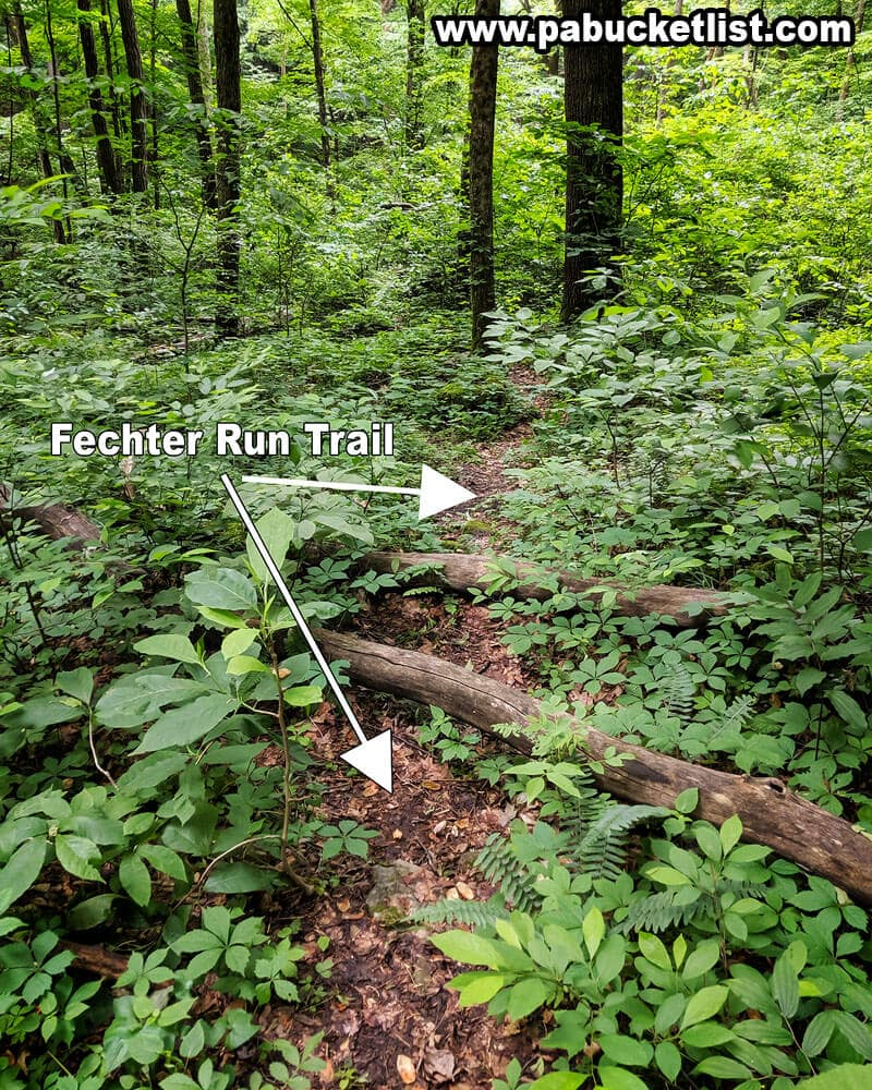 The Fechter Run Trail at Ohiopyle State Park.
