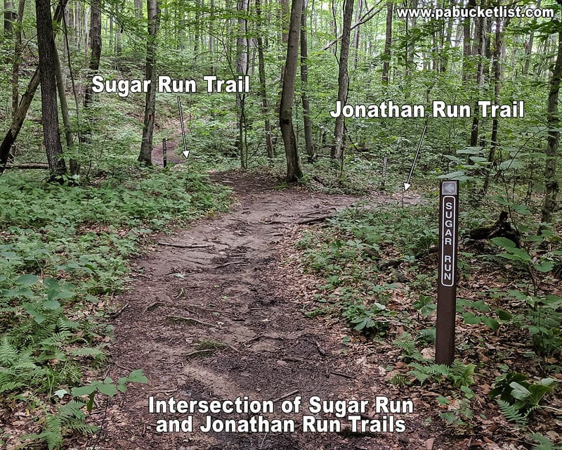 The intersection of the Sugar Run and Jonathan Run Trails.