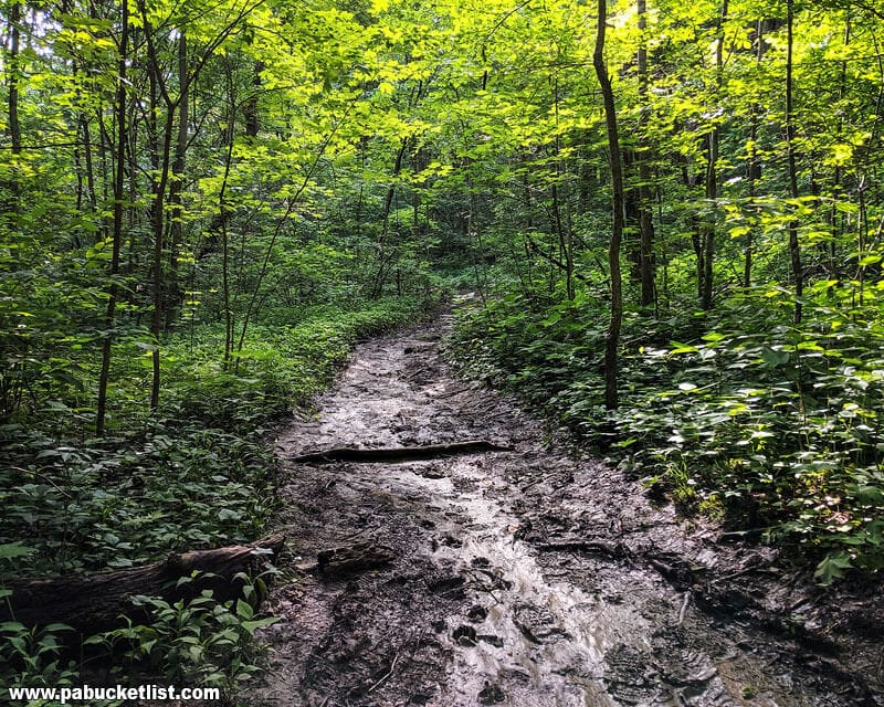 The frequently-muddy Jonathan Run Trail at Ohiopyle State Park.