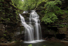 Ferns adorn the rocks near Big Falls on State Game Lands 13, Sullivan County, PA.