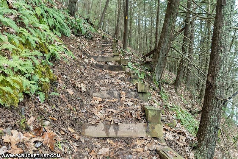Steps along the Bohen Trail.