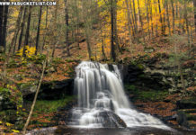 Incredible fall foliage around Dry Run Falls in the Loyalsock State Forest.