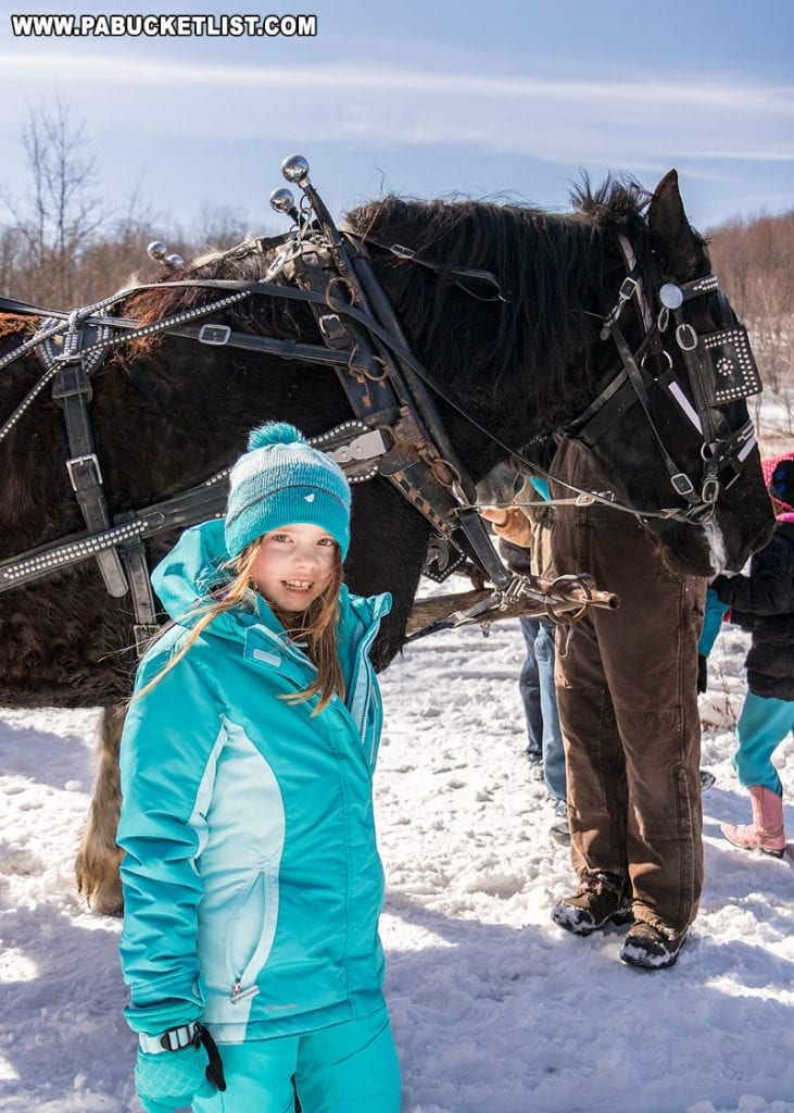 Haille getting to know one of the Percherons at Winterfest.