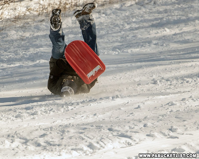 A sled rider wipes out at Winterfest.