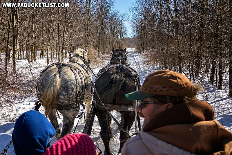 The view from a sleigh ride at Winterfest at Ohiopyle State Park.