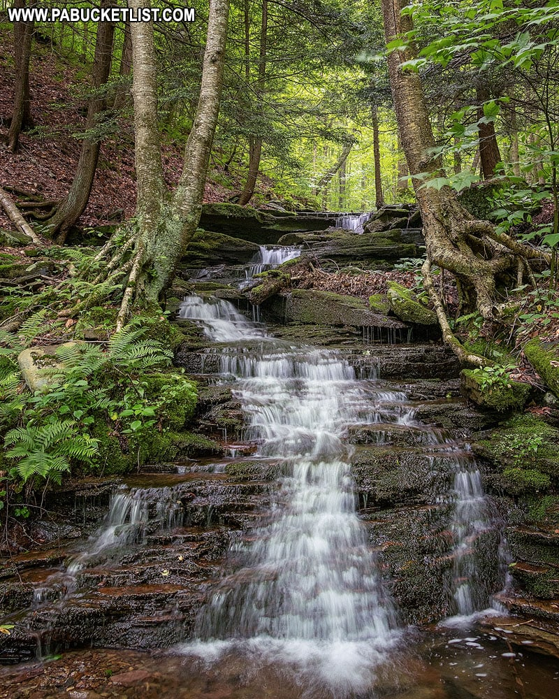 Unnamed waterfall along Cold Run in the Loyalsock State Forest.