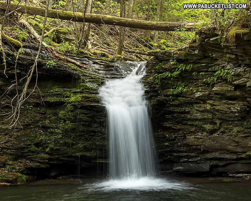 Springtime at Cottonwood Falls in the Loyalsock State Forest.