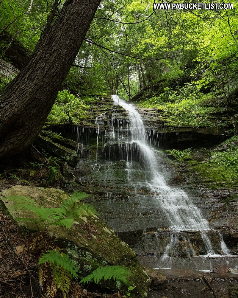 A summer view of Rexford Branch Falls in the Pine Creek Gorge.