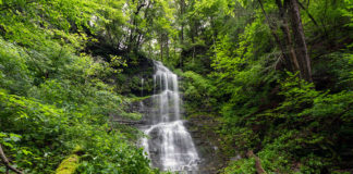Burdic Run Falls Pine Creek Gorge Pennsylvania