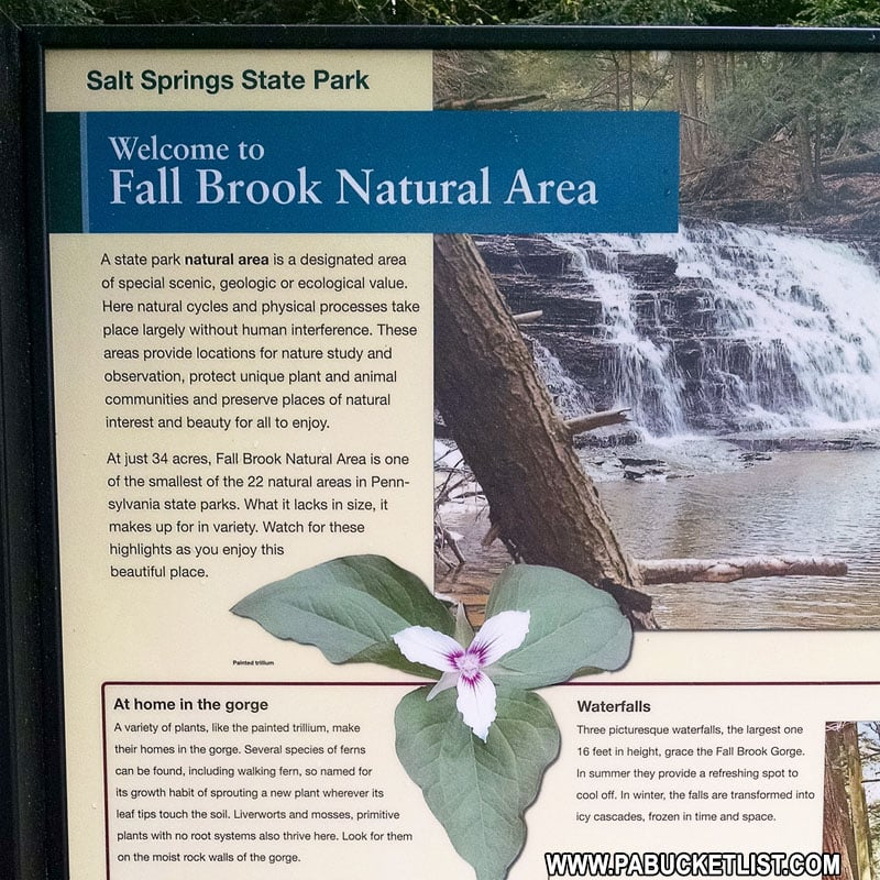 History of the Fall Brook Natural Area at Salt Springs State Park.