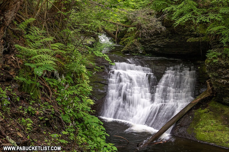 A springtime scene from Hornsbeck Creek in the Delaware Water Gap.