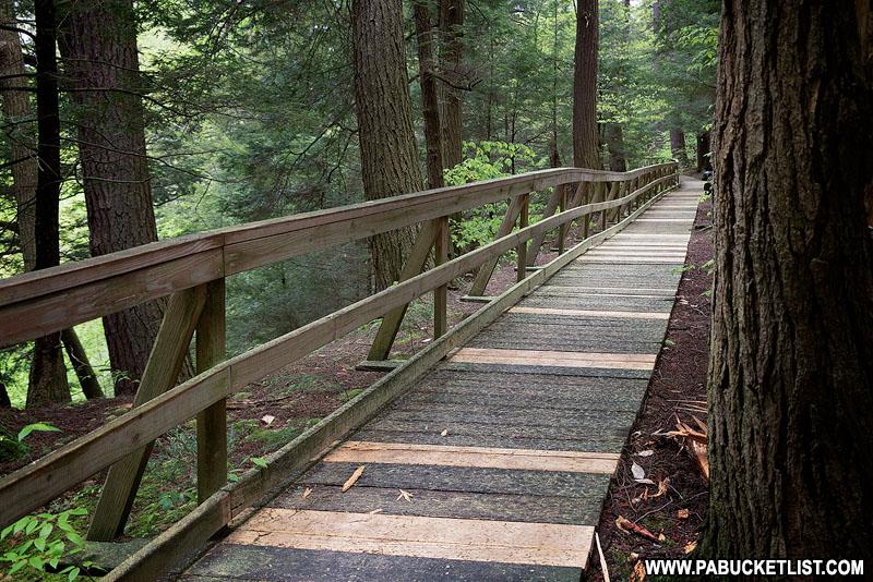 The Hemlock Trail at Salt Springs State Park.