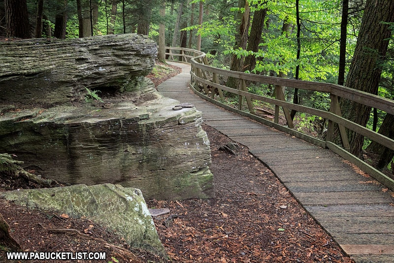The Hemlock Trail and Penny Rock at Salt Springs State Park