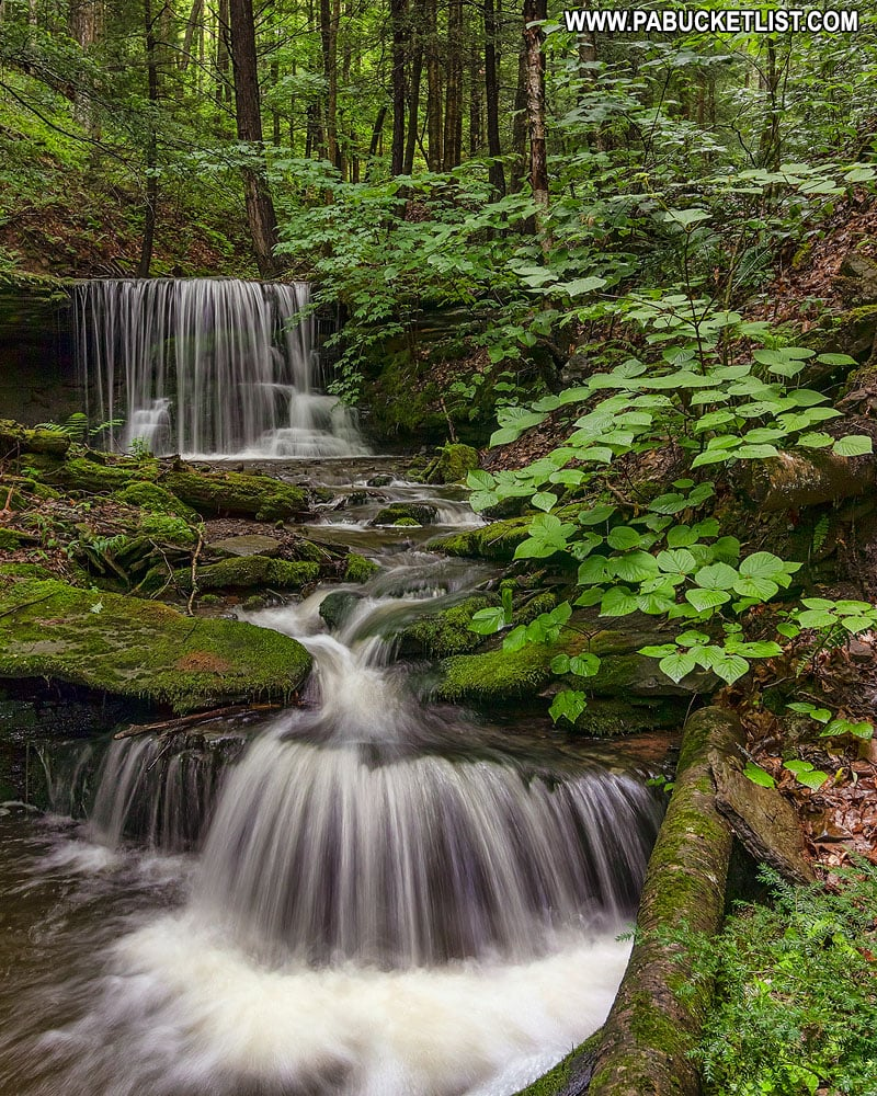 Springtime waterfalls along Bear Run In the Tioga State Forest.