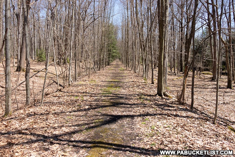 Road to the southern nuclear jet engine testing bunker in the Quehanna Wild Area.