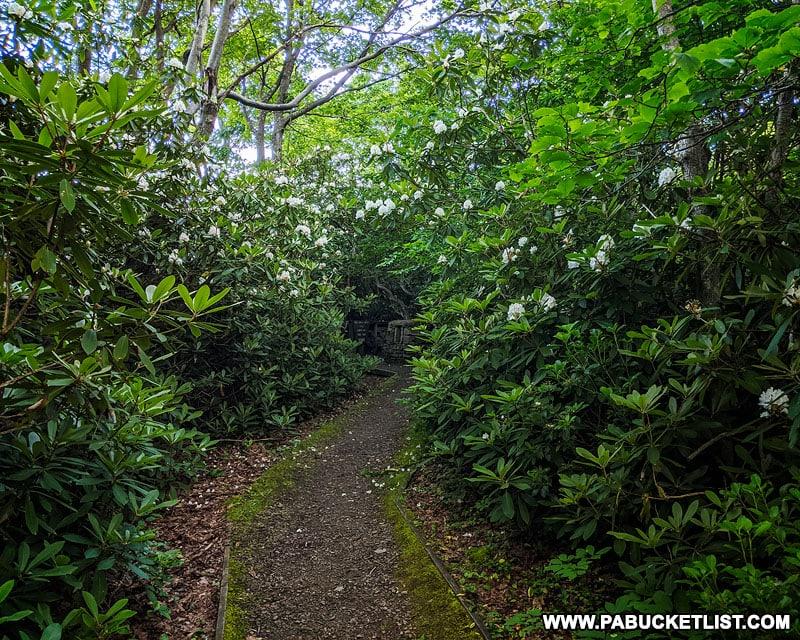 Short trail from parking area to Baughman Rocks on Mount Davis.