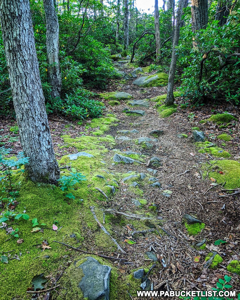 Camp Buckey Overlook Trail in the Forbes State Forest.