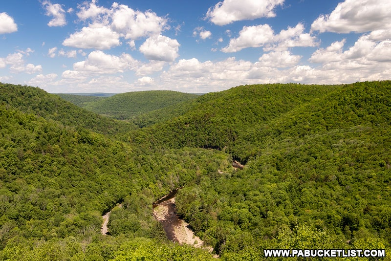 Canyon Vista in the Loyalsock State Forest