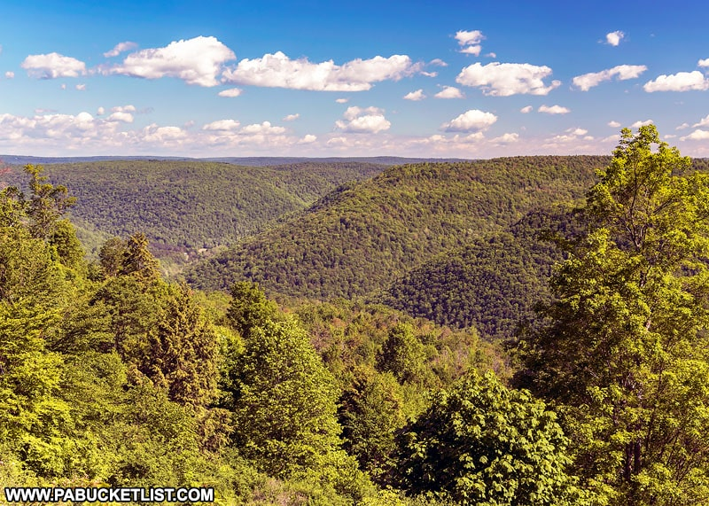 A summer scene from High Knob Road in the Loyalsock State Forest.