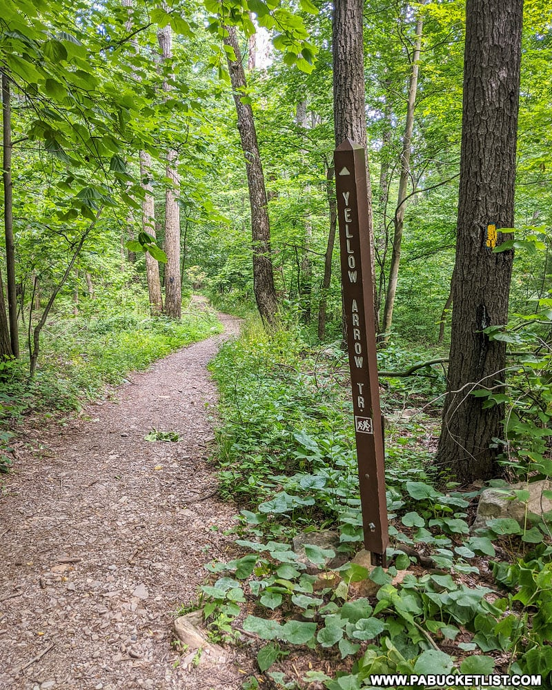 The Yellow Arrow Trail in the Rothrock State Forest.