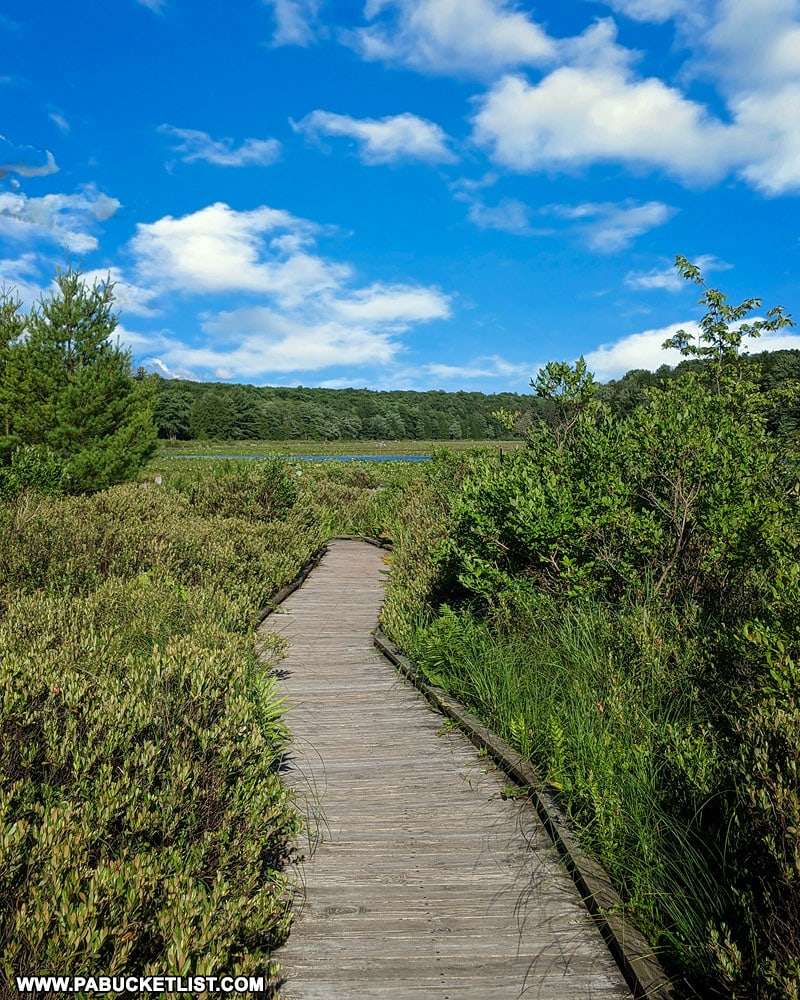 Bog Trail at Black Moshannon State Park
