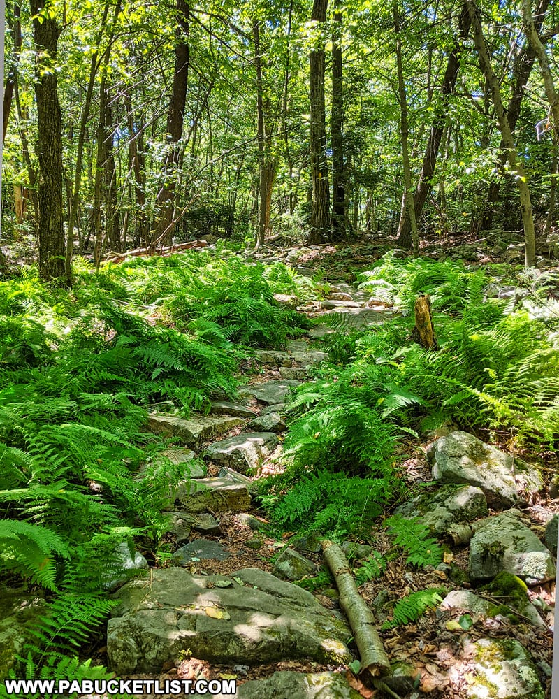 The Jackson Trail leading to David's Vista in the Rothrock State Forest.