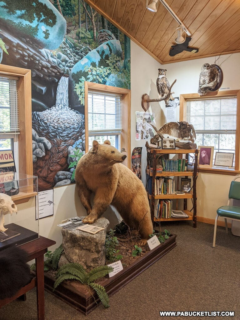 Some of the taxidermy exhibits at Worlds End State Park Visitors Center.