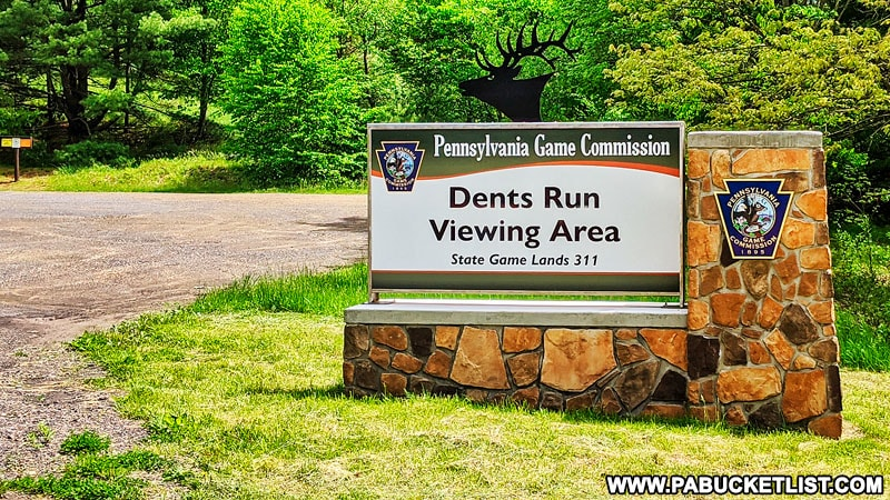 Dents Run Elk Viewing Area in Elk County.