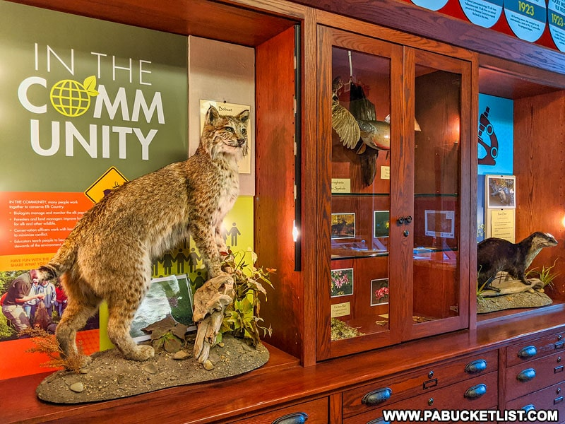 Discovery Room at the Visitor Center in Elk County.