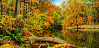 Fall foliage at Seven Springs Resort in Somerset County Pennsylvania.