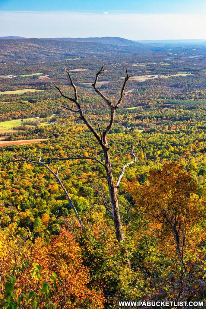 Fall foliage at Bark Road Vista in Fulton County PA