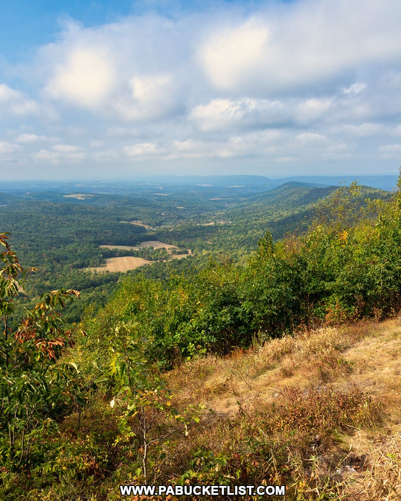Fisher Road Vista in the Buchanan State Forest