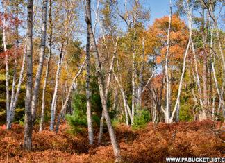Roadside fall foliage at the Marion Brooks Natural Area
