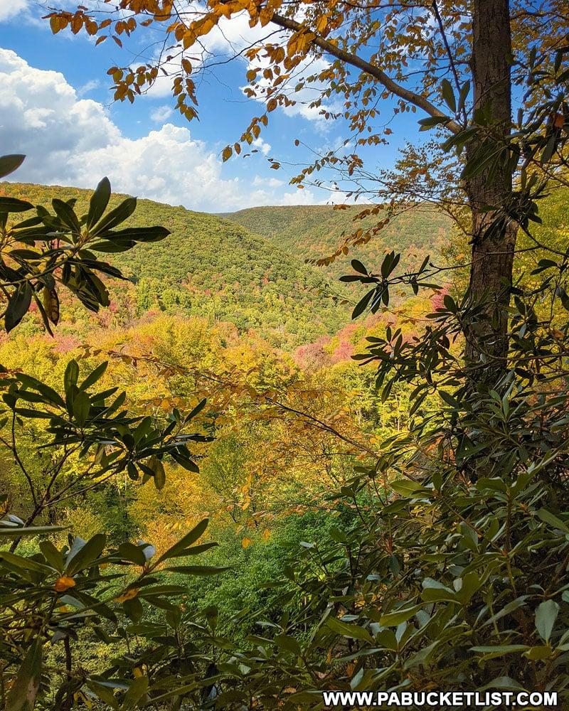Teaberry Loop Trail Vista in Elk County PA
