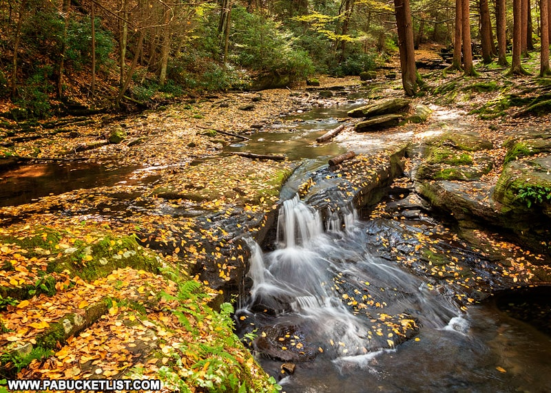 Fall foliage at Wykoff Run Falls in the Quehanna Wild Area.