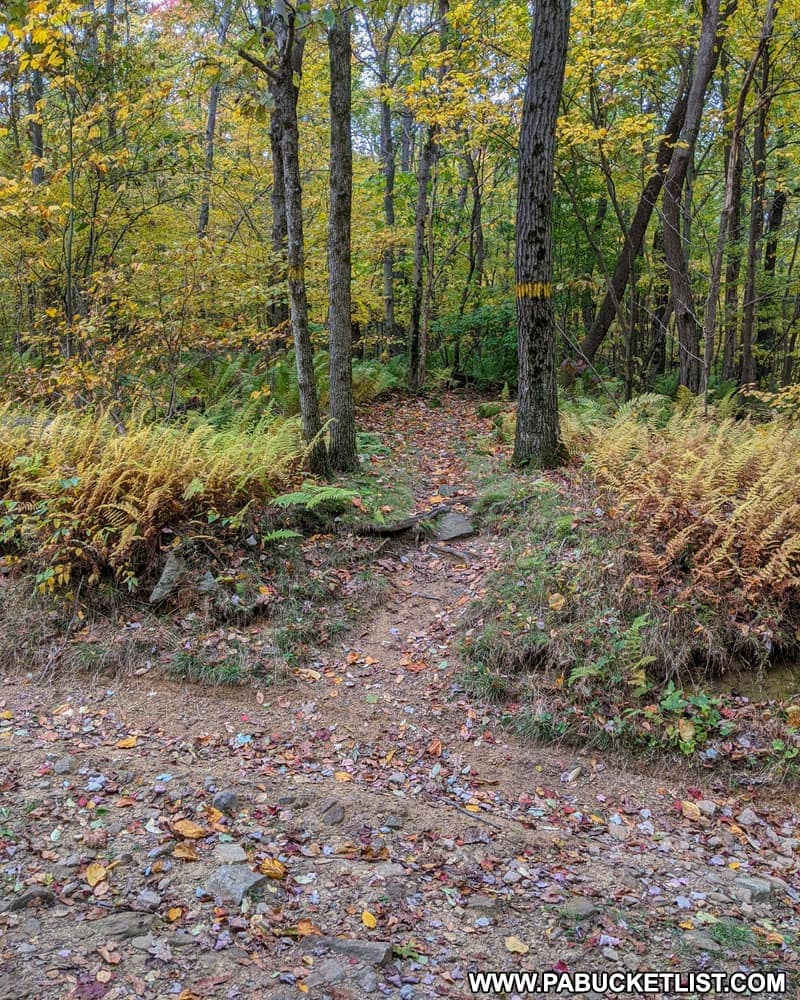 The Laurel Highlands Hiking Trail intersecting with Middle Fork Road in Fayette County PA