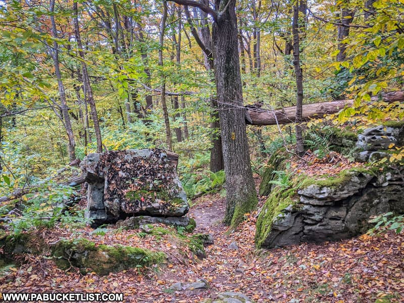 The Laurel Highlands Hiking Trail near Middle Fork Road in Fayette County PA