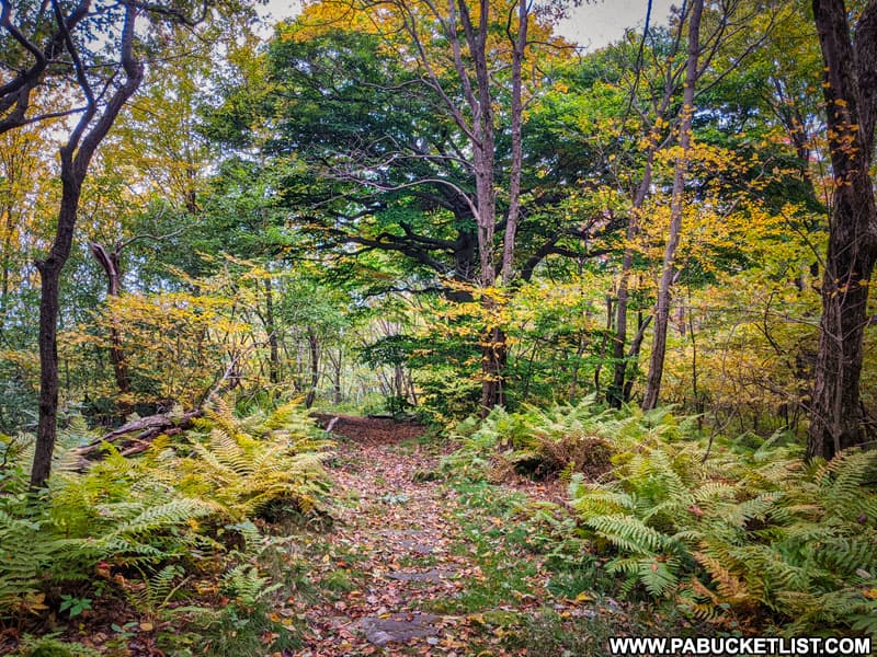 The Laurel Highlands Hiking Trail in Fayette County, Pennsylvania.