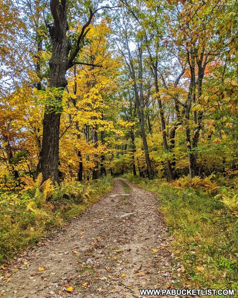 Middle Fork Road near the Laurel Highlands Hiking Trail.