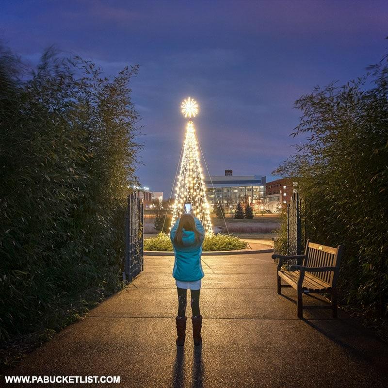 Christmas tree at the Penn State Arboretum.