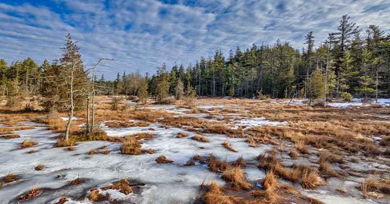 The partially frozen Spruce Flats Bog on top of the Laurel Summit in Westmoreland County, PA.