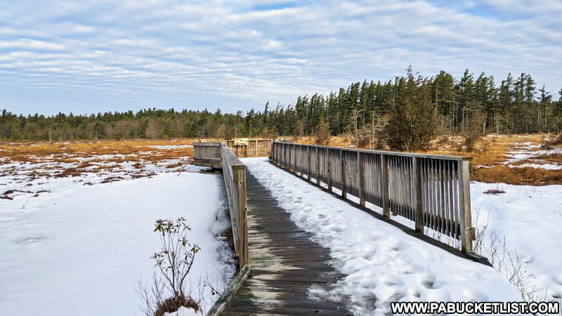 The snow covered Spruce Flats Bog in the Forbes State Forest.