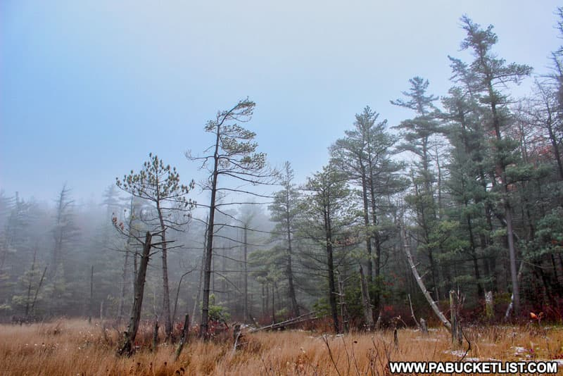 A late autumn morning at Spruce Flats Bog in the Laurel Highlands of Pennsylvania.