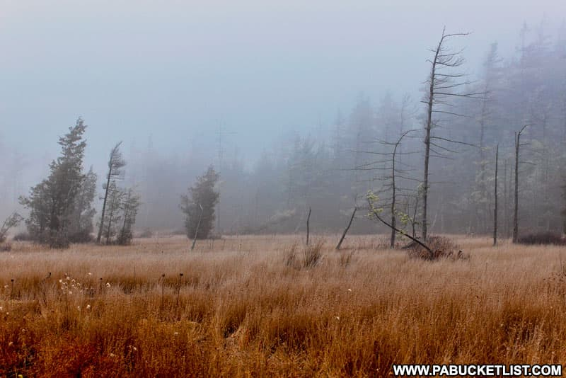 A foggy morning at Spruce Flats Bog in the Forbes State Forest.